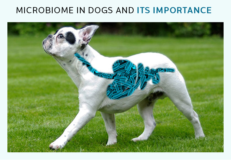Microbiome in Dogs and Its Importance