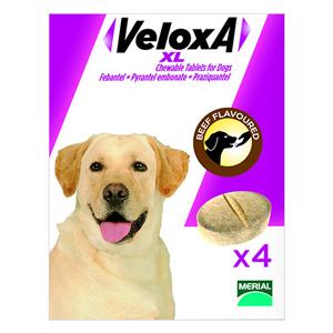 131190195255612616veloxa-chew-tabs-large-dog.jpg