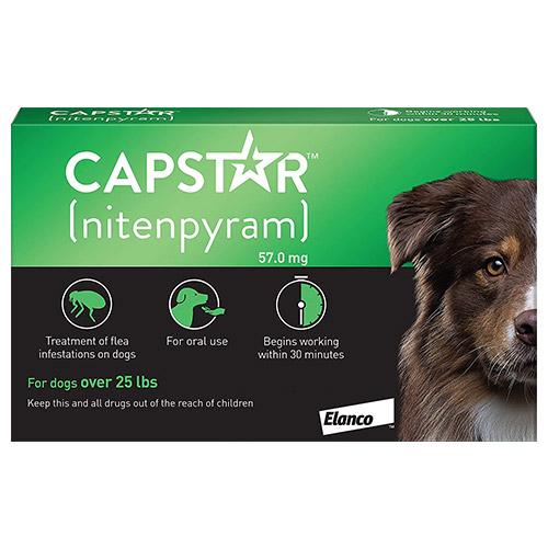 637253640188284188-capstar-dog-green.jpg