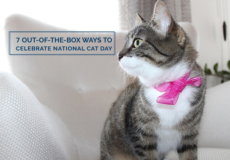 7 Out-of-the-Box Ways to Celebrate National Cat Day