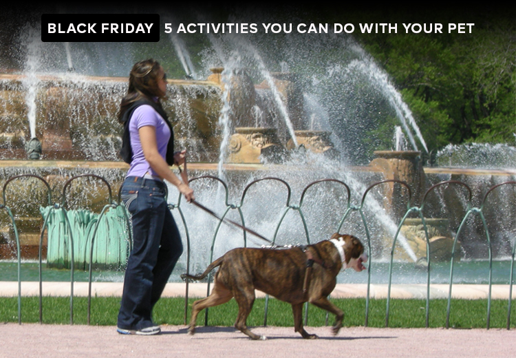 Black Friday - 5 Activities You Can Do With Your Pet