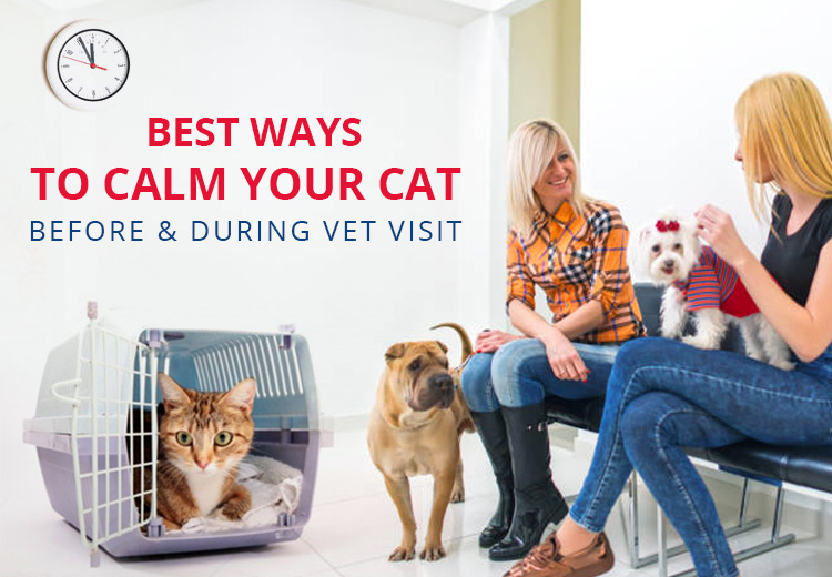 Best Ways To Calm Your Cat Before And During Vet Visit