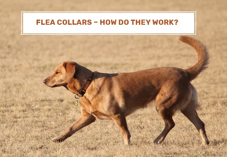 Flea Collars - How Do They Work?