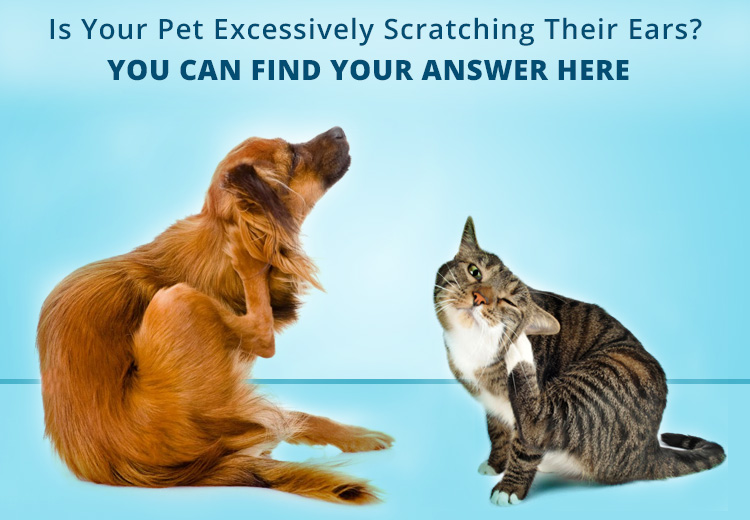 Is your pet excessively scratching their ears?
