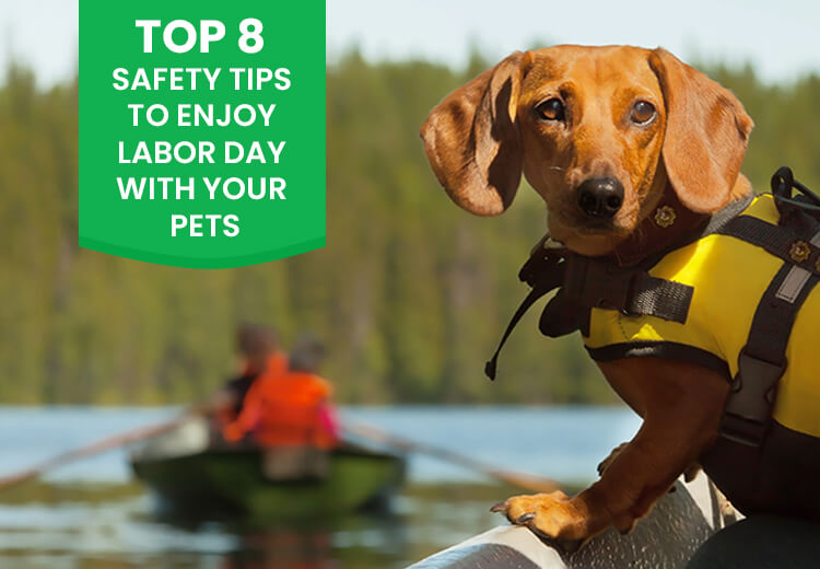 Top 8 Safety Tips To Enjoy Labor Day with Your Pets