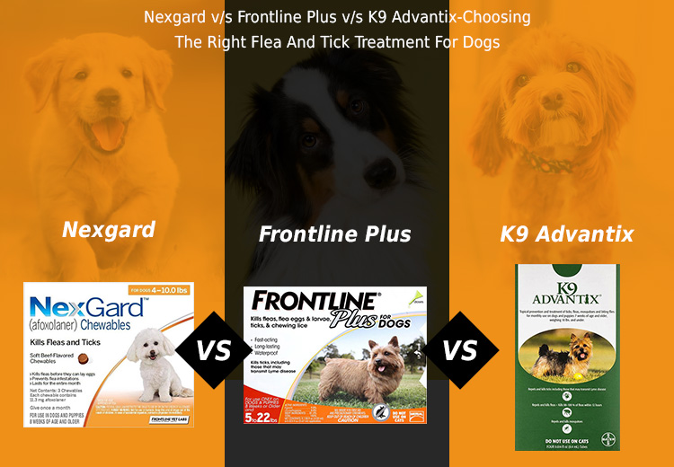 Nexgard Vs Frontline Plus Vs K9 Advantix - Choosing The Right Flea And Tick Treatment For Dogs