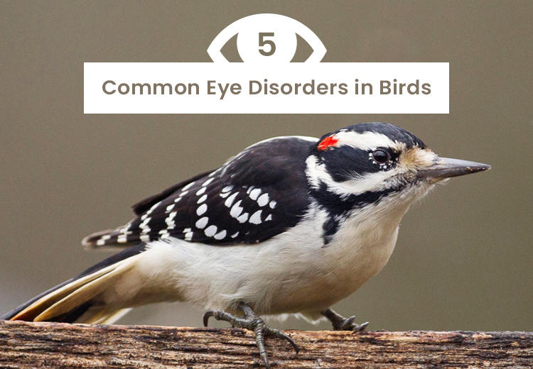 5 Common Eye Disorders in Birds
