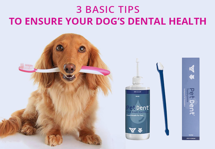 3 Basic Tips To Ensure Your Dogs Dental Health