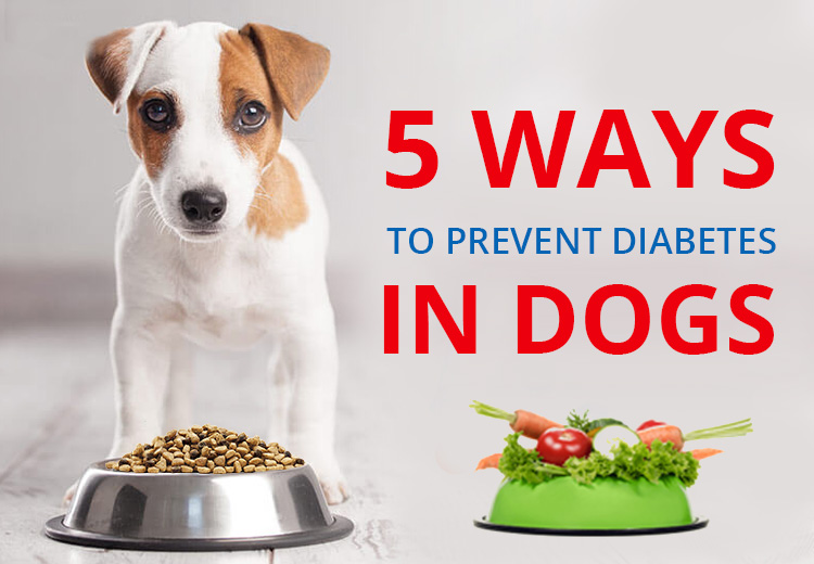 5 Ways To Prevent Diabetes In Dogs