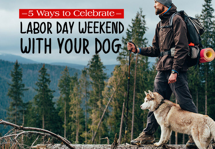 5 Ways to Celebrate Labor Day Weekend with your Dog