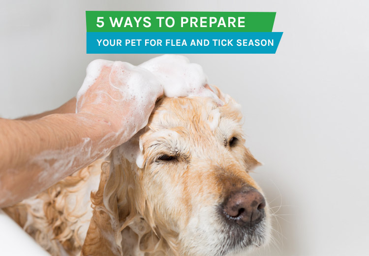 5 Ways to Prepare Your Pet For Flea and Tick Season