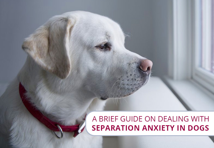 A Brief Guide on Dealing with Separation Anxiety in Dogs