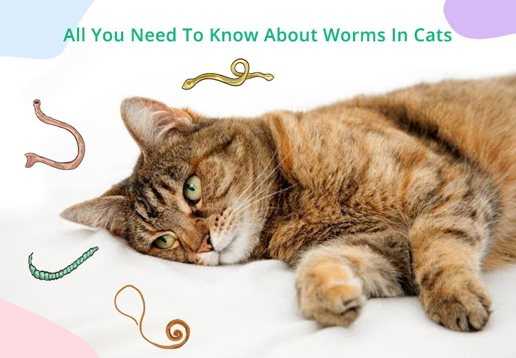 All You Need To Know About Worms In Cats