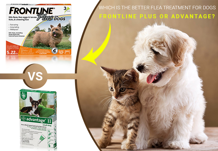 Which Is The Better Flea Treatment For Dogs-Frontline Plus Or Advantage?