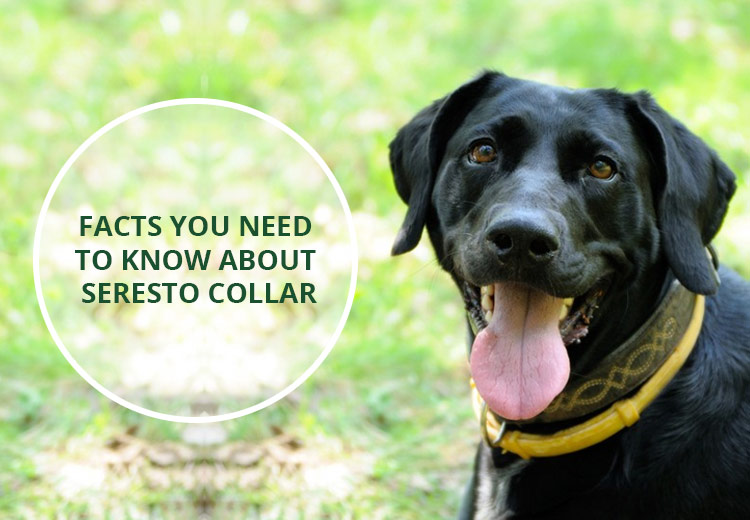 Facts You Need To Know About Seresto Collar