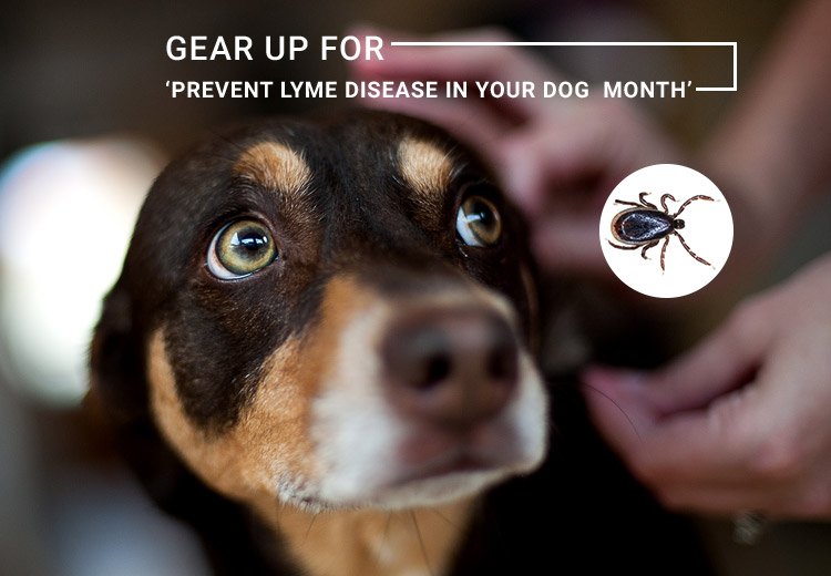 Gear Up For Prevent Lyme Disease in Dog Month