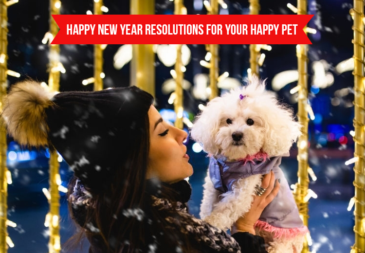 New Years Resolutions for Pet