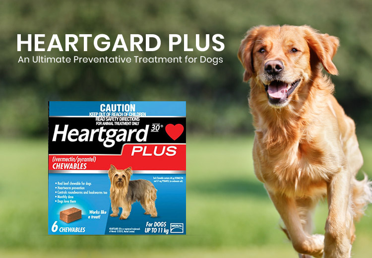 Heartgard Plus-An Ultimate Preventative Treatment for Dogs