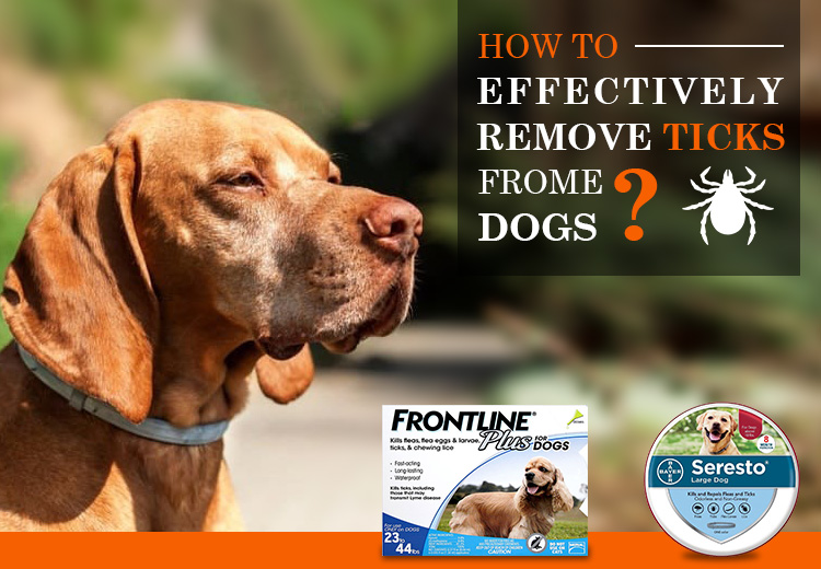 How to Remove Ticks from Dogs?