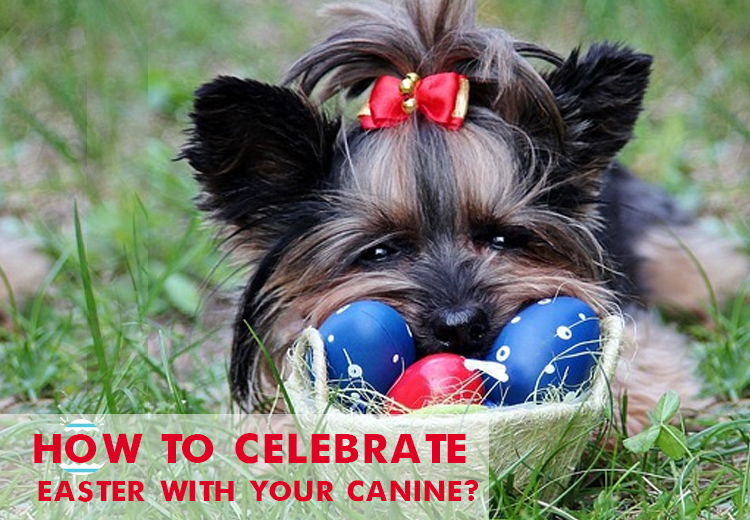 How to Celebrate Easter with Your Canine?