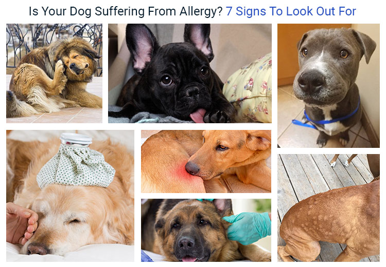 Is Your Dog Suffering From Allergy? 7 Signs To Look Out For
