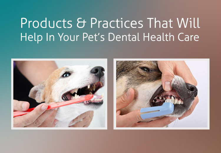 Products And Practices That Will Help In Your Pets Dental Health Care