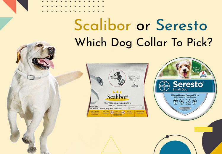 Which Dog Collar To Pick Scalibor or Seresto ?