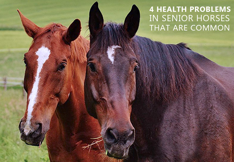4 Common Health Problems in Senior Horses
