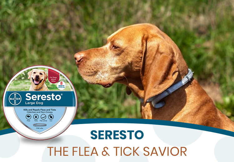 Seresto - The Flea & Tick Savior