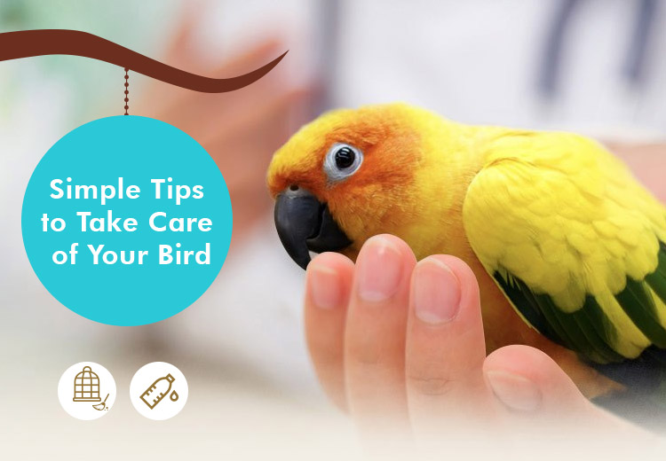 Simple Tips to Take Care of Your Bird