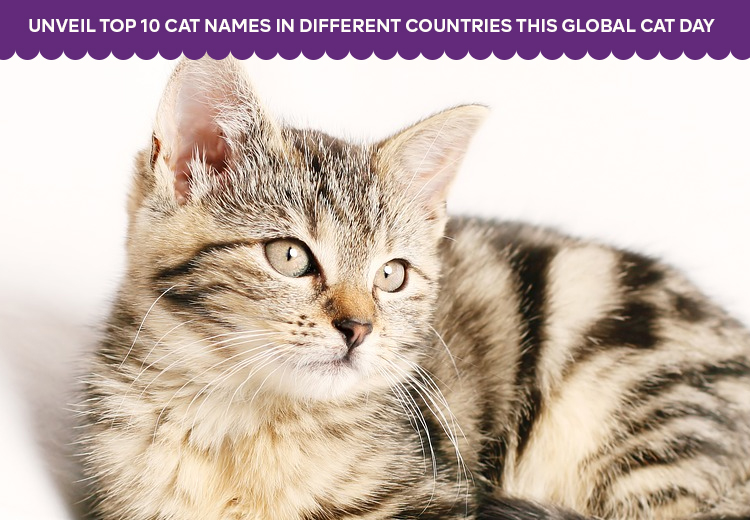 Unveil Top 10 Cat Names in Different Countries This Global Cat Day