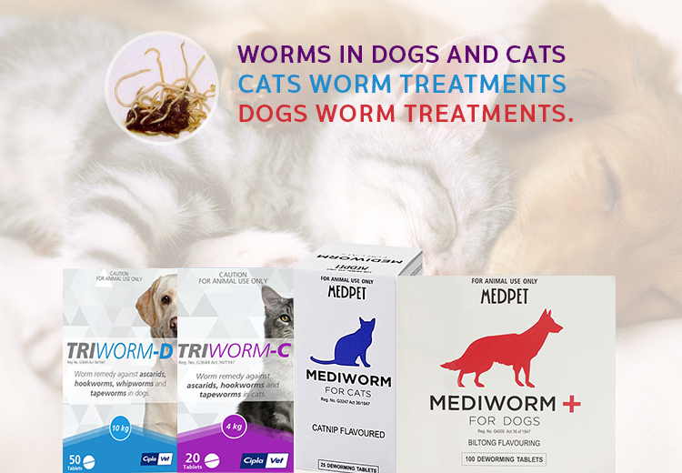 Dewormers For Dogs and Cats