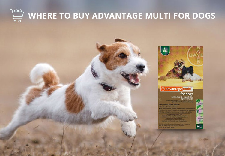 Where To Buy Advantage Multi For Dogs