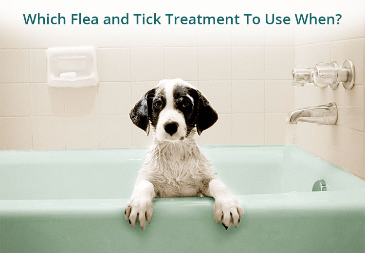 Which Flea and Tick Treatment To Use and When