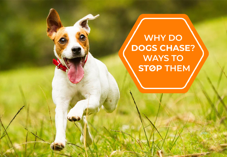 Why Do Dogs Chase? Ways To Stop Them