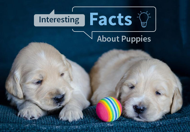 7 Interesting Facts About Puppies