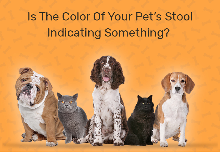 Is the Color of Your Pets Stool Indicating Something