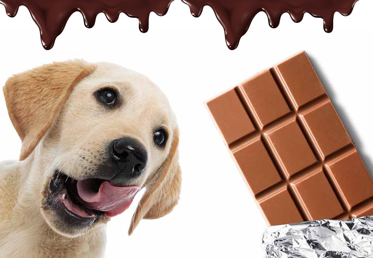 types of chocolates and how they impact dogs