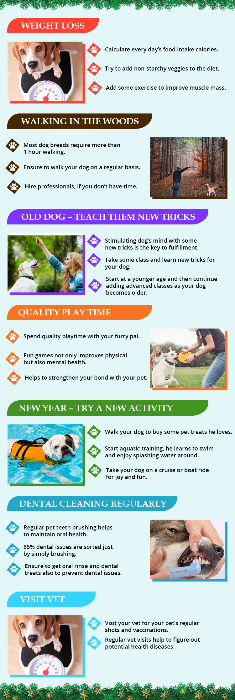 Happy New Year Resolutions for Your Happy Pet